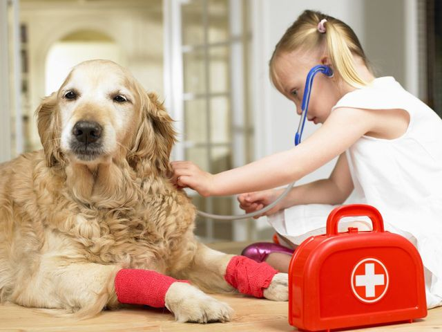 Ребенок лечит собаку
