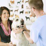 Способы лечения рака у собак