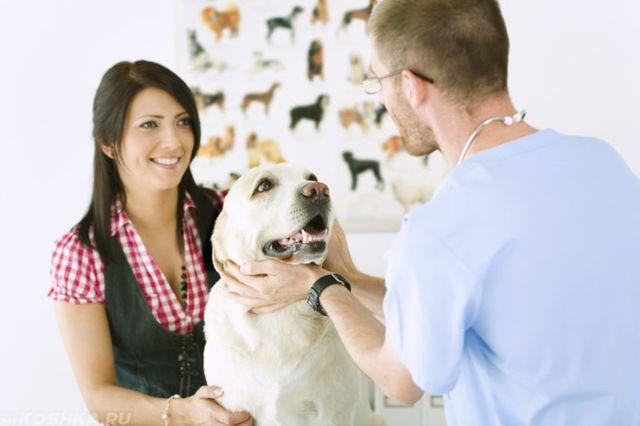 Хозяйка с собакой у ветеринара