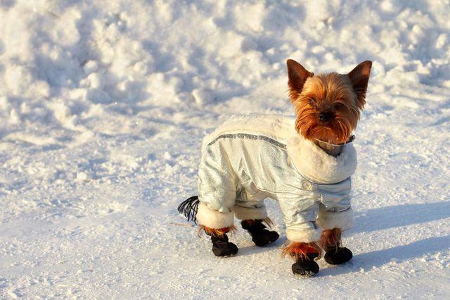 Одетый пес на снегу