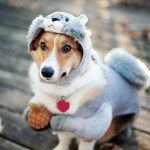 Причины и лечение мочекаменной болезни у собак