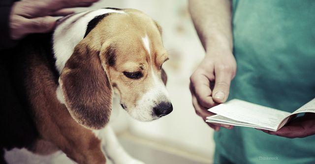 Пес у врача