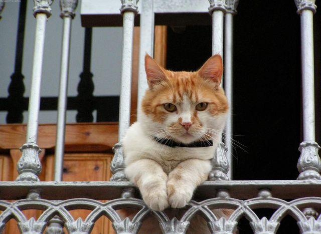 Кошка смотри с балкона