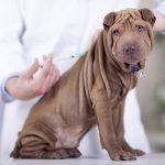 Какие прививки и в каком возрасте делают собакам