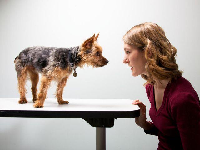 Собака на столе