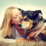 Лечение рака внутренних органов у собак
