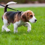 Причины и симптомы рахита у собак