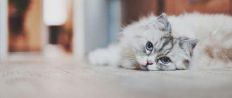 Кот лежит на полу