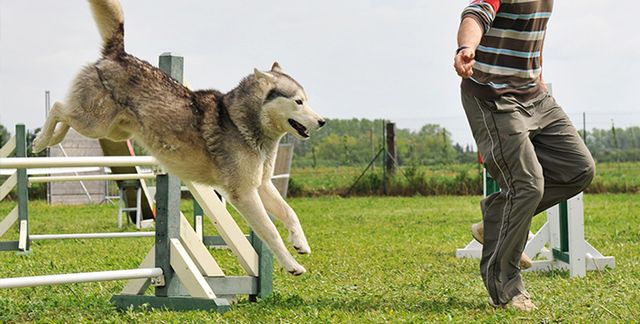 Хозяин бегает с собакой