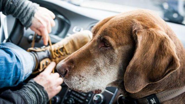 Хозяин собирается на прогулку с псом