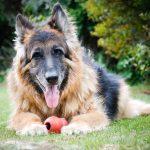 Частые заболевания у пожилых собак