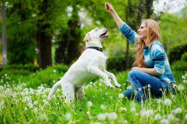Хозяйка играет с собакой