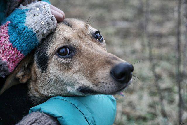 Токсоплазмоз у собак – симптомы и лечение, профилактика 2020