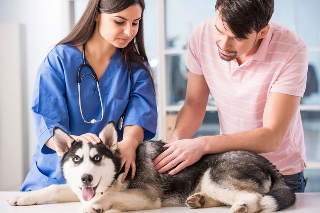 Хозяин с собакой у ветеринара