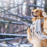 Особенности иммунитета у собак