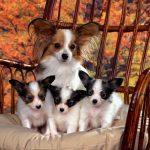 Календарь беременности собаки