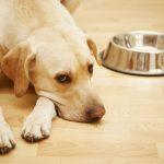 Самые опасные смертельные патологии у собак