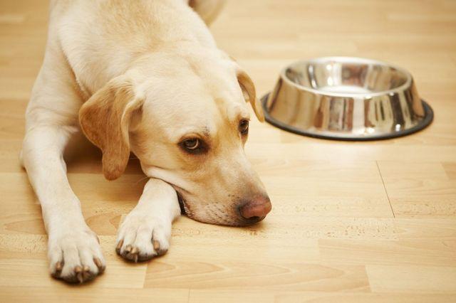 Пес лежит возле пустой миски
