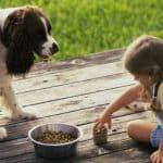 Почему у собаки повышаются АЛТ и АСТ