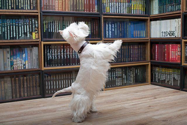 Пес стоит на задних лапах