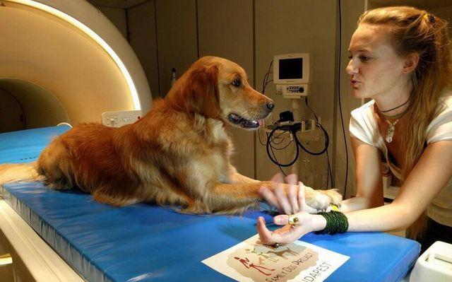 Собака лежит на МРТ