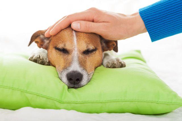 Хозяин гладит пса