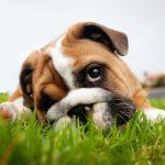 Повышенный уровень липазы у собак