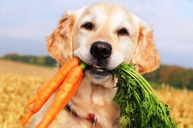 Пес принес морковь