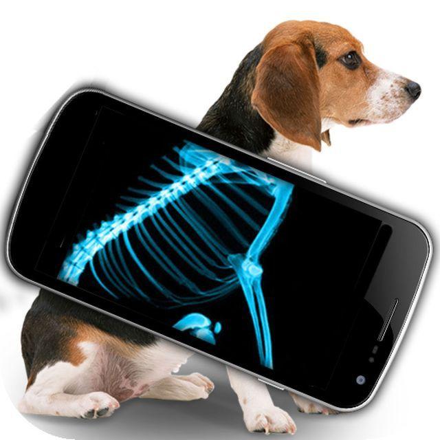 Рентген собаке