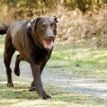 Обзор заболеваний позвоночника у собак