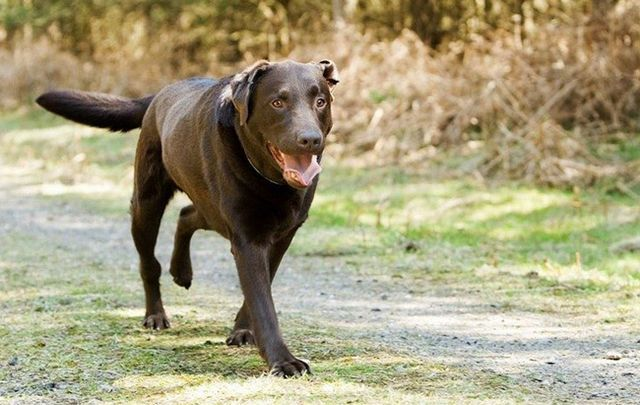 Собака бежит по дорожке
