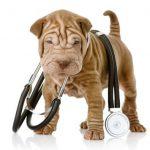 Давление у собак: норма и отклонения