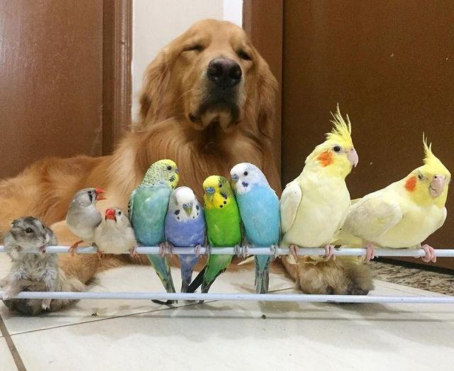 Пес с попугаями