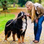 Как протекает хламидиоз у собак