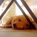 Возможные причины и симптомы инфаркта у собак