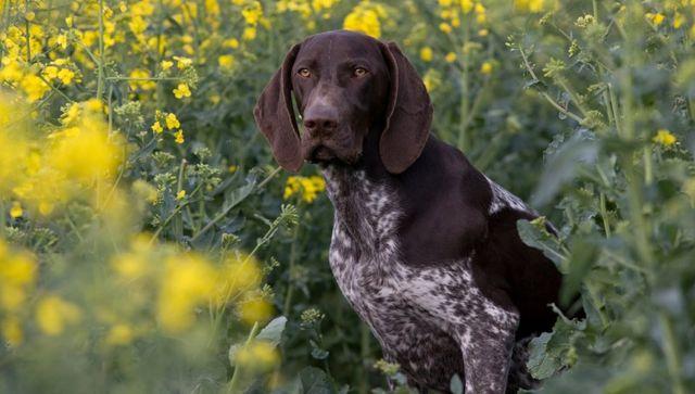 Собака в кустах