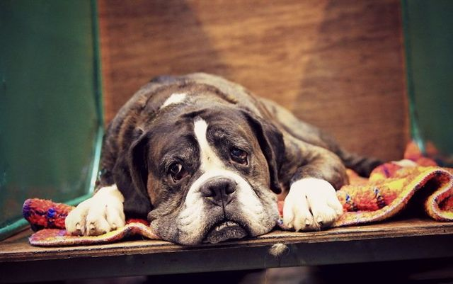 Пес лежит на ступеньках
