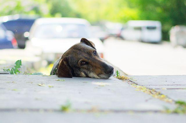 Уличный пес