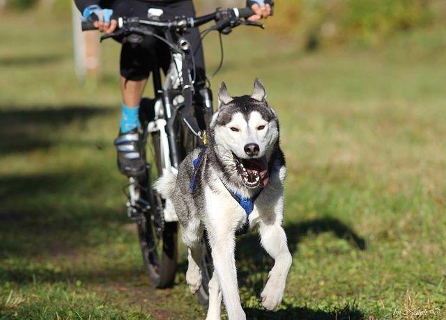 Физические нагрузки для собаки