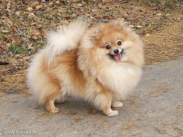 Собака на дорожке