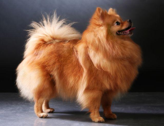 Постановочная съемка собаки