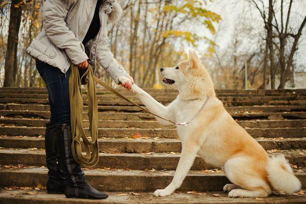 Собака подает лапу