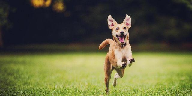 Пес бежит по траве