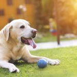 Биологически активные вещества в ветеринарии