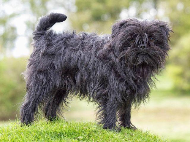 Пес на траве