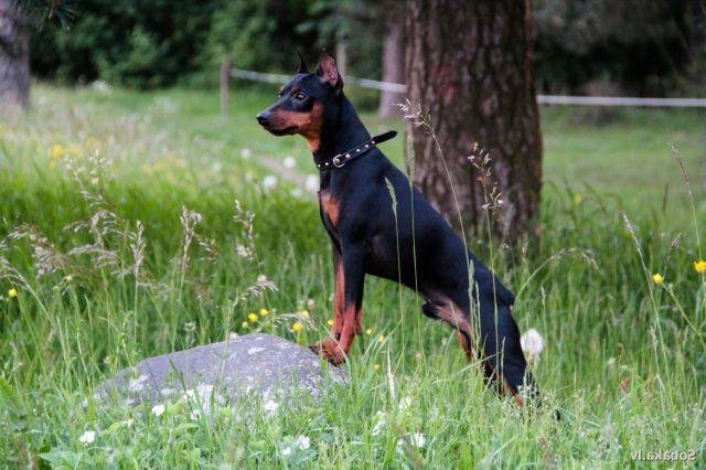 Пес стоит на камне