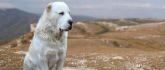 Пес на фоне гор