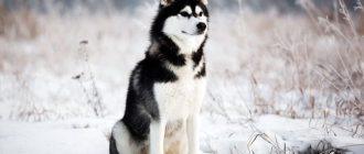 Собака на зимнем поле