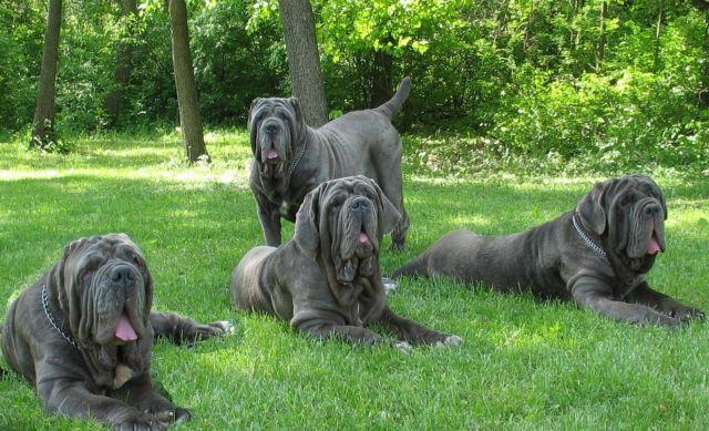 Четыре собаки на траве