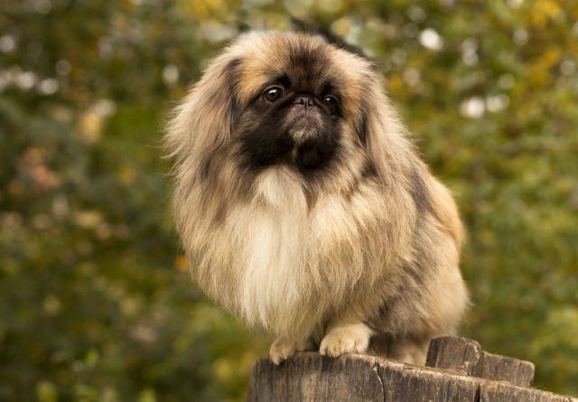 Пес на фоне дерева